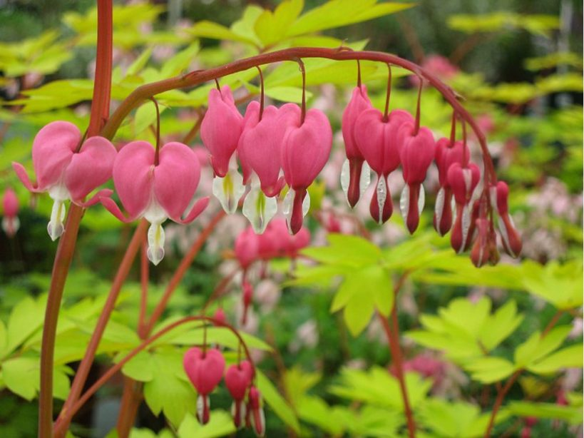 brian-minter-new-perennials-that-can-add-magic-to-any-shade-garden