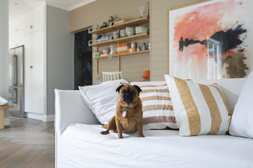 best-pet-friendly-furniture-decor-what-to-look-for