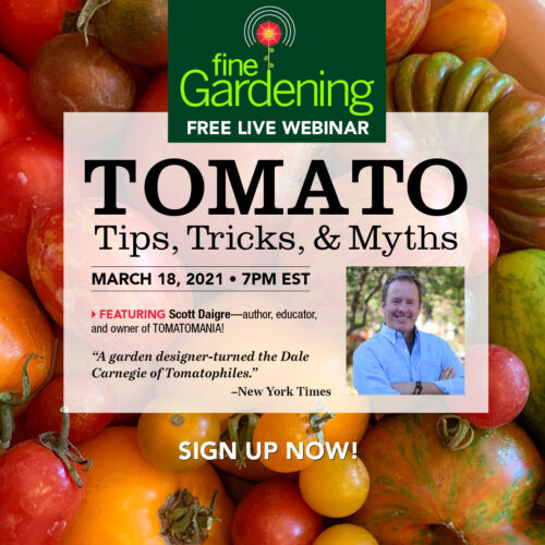 fine-gardenings-guide-to-growing-great-tomatoes