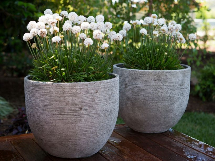try-a-few-of-these-plants-in-your-perennial-areas-to-extend-the-colour
