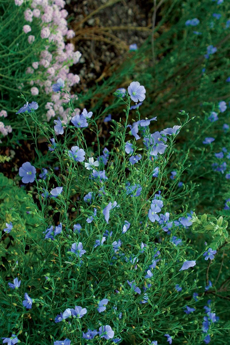 20-great-perennials-to-start-from-seed