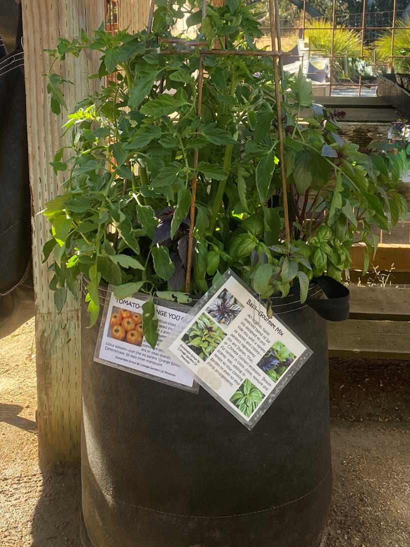 the-best-warm-season-veggies-for-container-gardening-in-northern-california